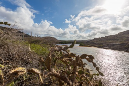 A cactus along the Tortuga Trail in Curaçao